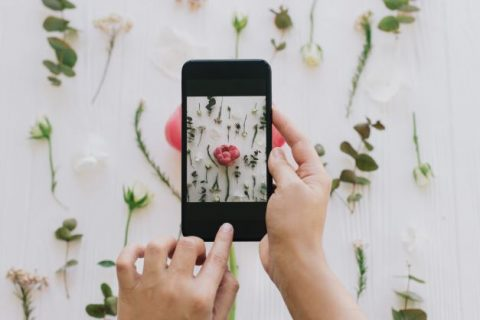 Smartphone taking visual content photo of flowers.